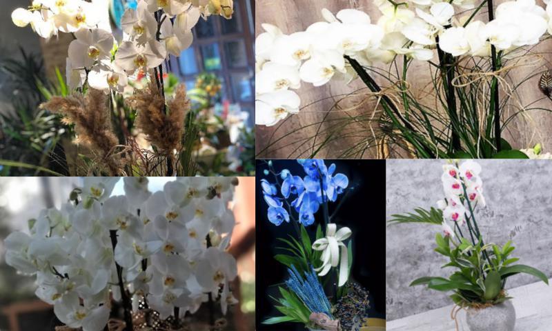 Ekonomik Orkide Tasarımları